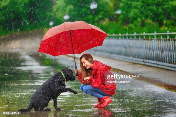 woman with umbrella and dog - rain stock pictures, royalty-free photos & images