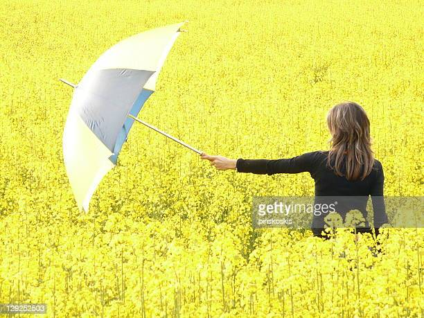 woman with umbrella in yellow folower field - maresme stock photos and pictures