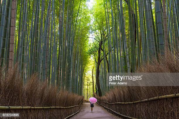 Woman with umbrella walking in bamboo forest