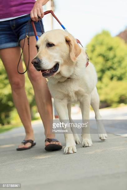 woman with visual impairment walking with her service dog - servicehund stock-fotos und bilder
