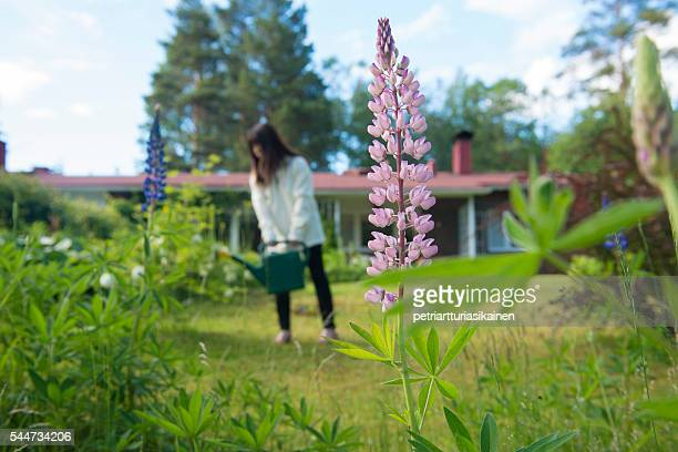 woman with watering can in garden. - middlebare afstand stockfoto's en -beelden
