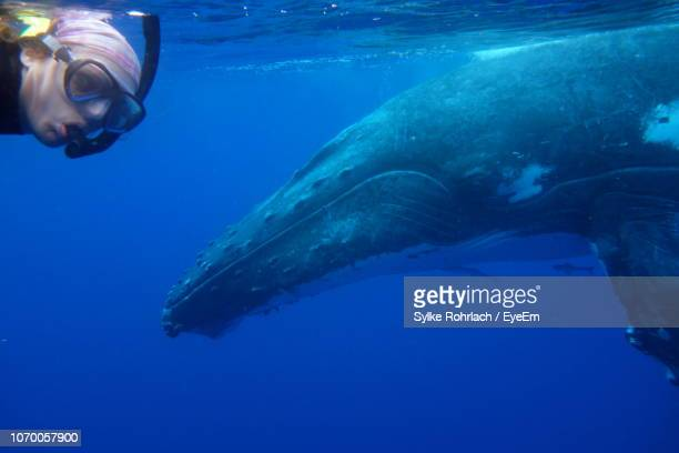 woman with whale snorkeling in sea - nuku'alofa stock pictures, royalty-free photos & images