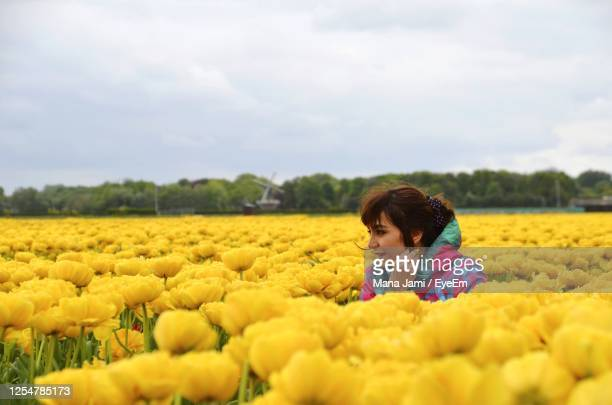 woman with yellow flowers on field - netherlands stock pictures, royalty-free photos & images