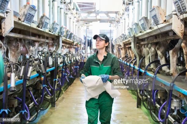 搾乳機のパネルを制御する女性労働者 - milking farm ストックフォトと画像
