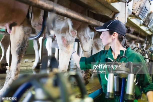 Woman worker controlling the milking machine