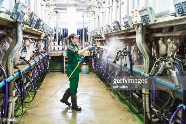 woman worker washing the milking machine - factory farming stock pictures, royalty-free photos & images