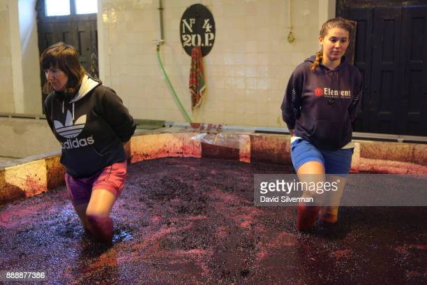 Woman workers step barefoot through fermenting wine to stir the grape skins in large stone lagares at the Quinta do Noval winery on October 9 2016...