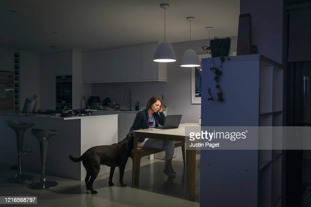 woman working from home late at night. the dog keeps her company - canine stock pictures, royalty-free photos & images