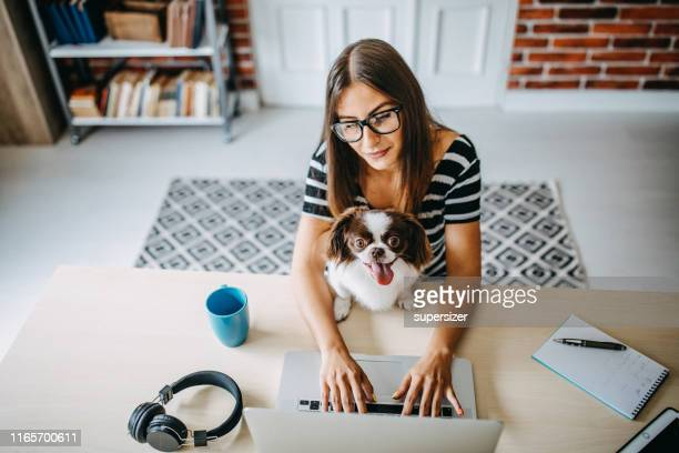 woman working from home - pets stock pictures, royalty-free photos & images