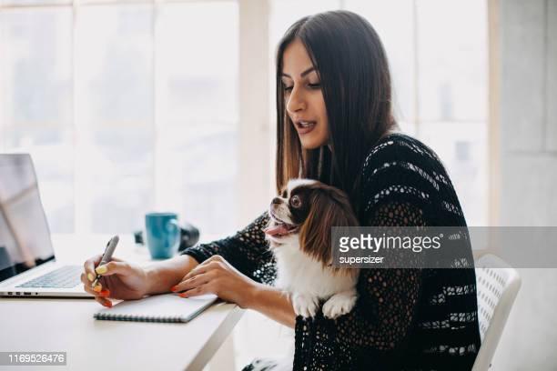 donna che lavora da casa - dog pad foto e immagini stock