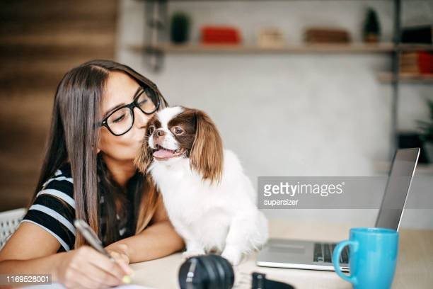 woman working from home - dog pad foto e immagini stock