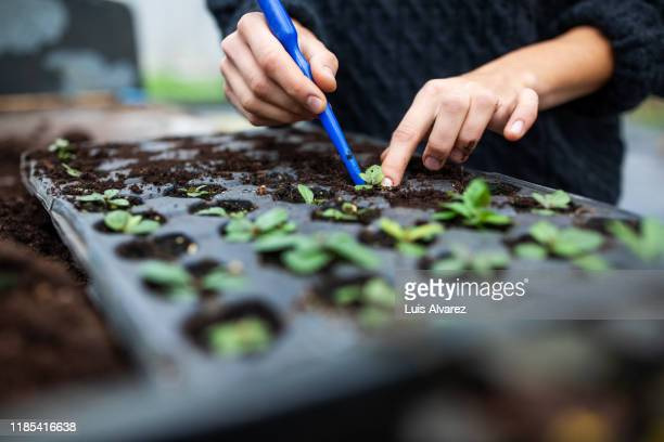 woman working in a garden center planting seedling - 検査業務 開始の地 ストックフォトと画像