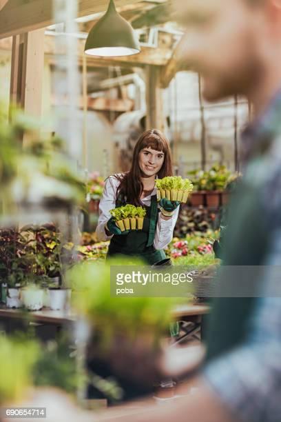 vrouw werken in een kas, neigt en dienbladen van zaailingen sorteren