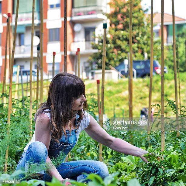 Femme travaillant dans un jardin urbain ville de légumes
