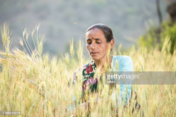 woman working in agricultural field - uttarakhand stock pictures, royalty-free photos & images
