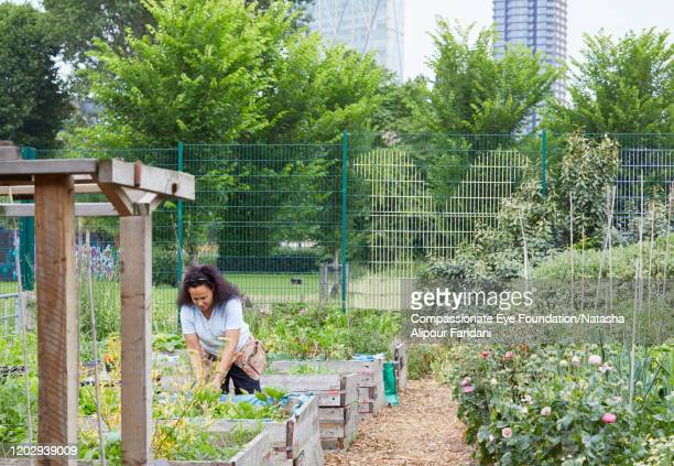 woman working in community garden - compassionate eye foundation stock pictures, royalty-free photos & images