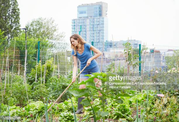 """woman working in community garden - """"compassionate eye"""" stock pictures, royalty-free photos & images"""
