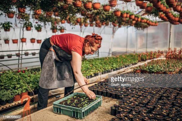 Woman working in flower greenhouse alone