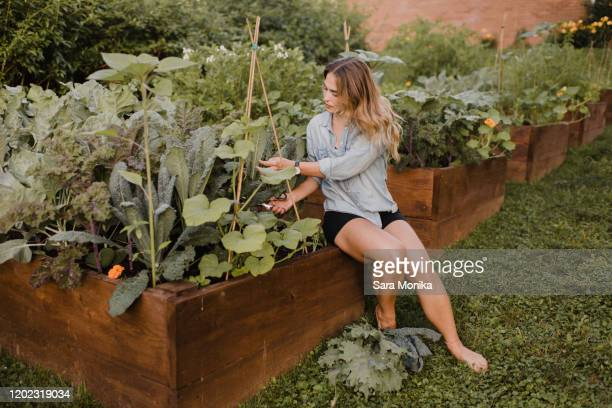 woman working in her garden - 飼い葉桶 ストックフォトと画像