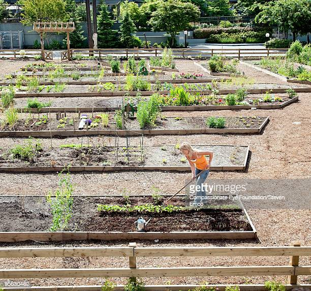 "woman working in small garden - ""compassionate eye"" fotografías e imágenes de stock"