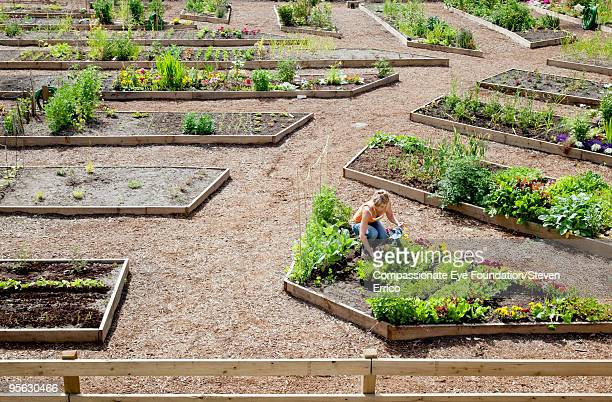 woman working in small garden