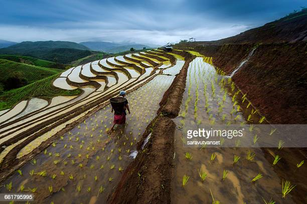 woman working in terraced rice paddy field, thailand - effet graphique naturel photos et images de collection