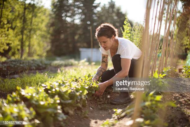 woman working in the vegetable garden - one mature woman only stock pictures, royalty-free photos & images