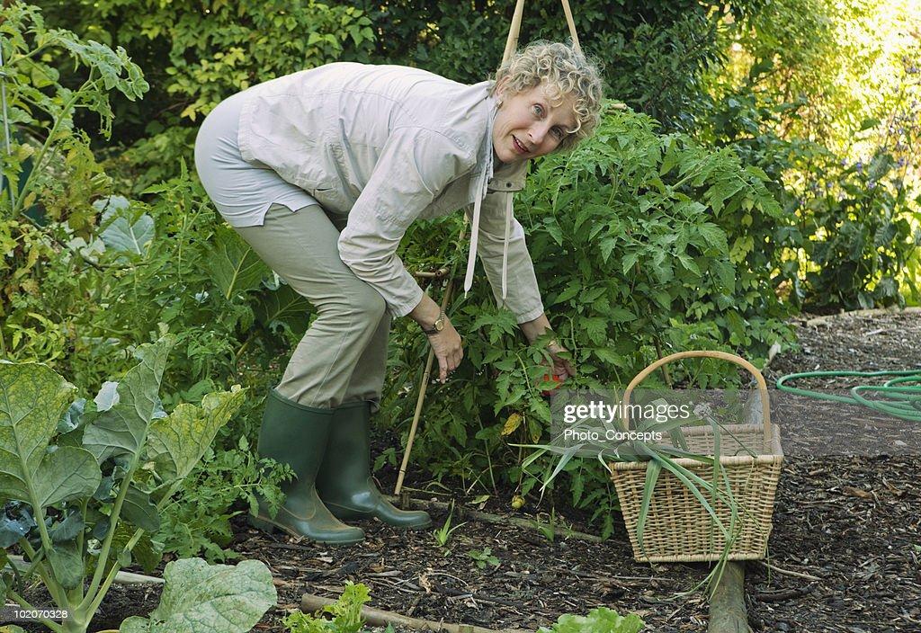 Woman working in vegetable garden : Stock Photo