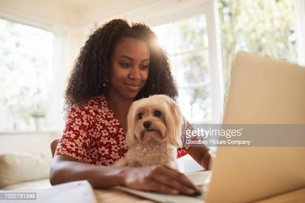 donna che lavora su un laptop con il suo cane in grembo - dog pad foto e immagini stock