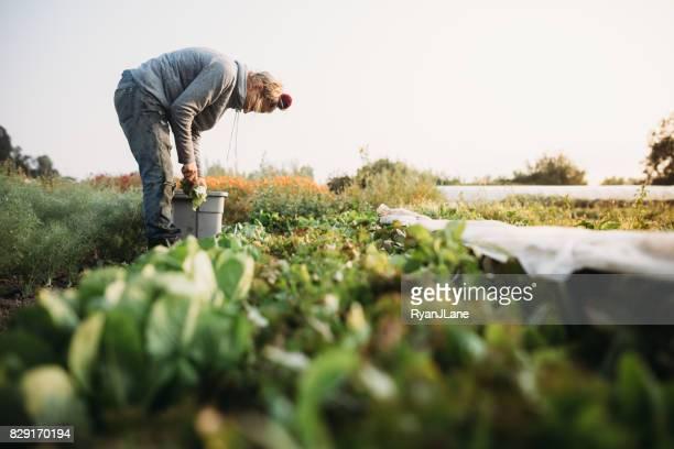 Frau arbeitet auf Bauernhof