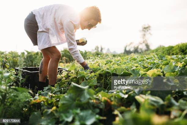 woman working on farm - bend oregon stock photos and pictures