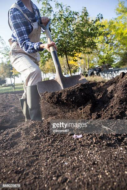 woman working on farm, preparing vegetable patch with shovel - digging stock pictures, royalty-free photos & images