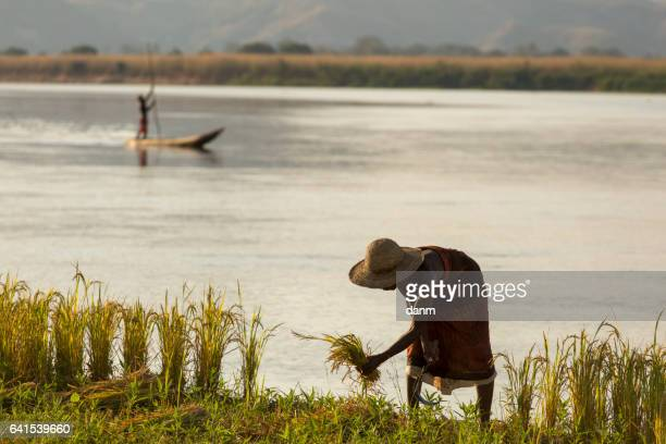 Woman working on field of rice in Madagascar, Africa with a fisherman in background