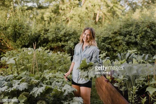 woman working on plants and vegetables in her garden - 飼い葉桶 ストックフォトと画像