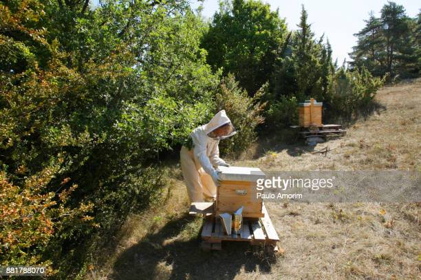A Woman Working with Bee Hives