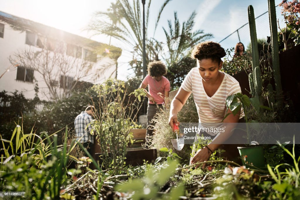 Woman working with friends in community garden : Stock Photo