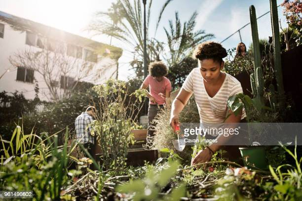 woman working with friends in community garden - cavan images foto e immagini stock