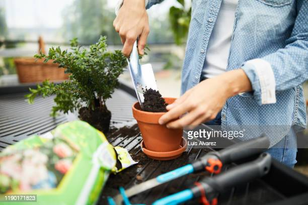woman working with gardening equipment in greenhouse - potting stock pictures, royalty-free photos & images