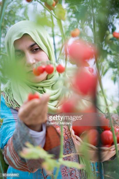 Woman working with vegetables in greenhouse