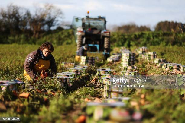 A woman works in a carrot field on December 12 2017 in Creances northwestern France / AFP PHOTO / CHARLY TRIBALLEAU
