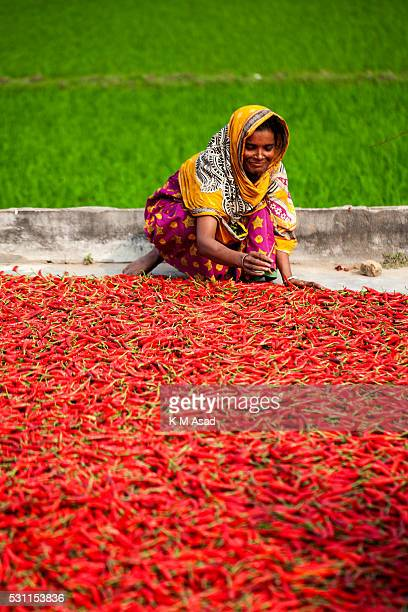 A woman works in a red chilli pepper drying factory under the sun near Jamuna River in Bogra Bangladesh on March 03 2016 Many women come from various...