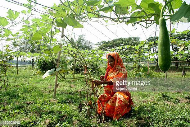 A woman works in her vegetable garden in the village of Jhenaigati in Sherpur Bangladesh October 3 2009