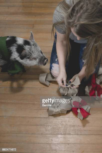 Woman Wrapping Presents While Pet Pig Watches