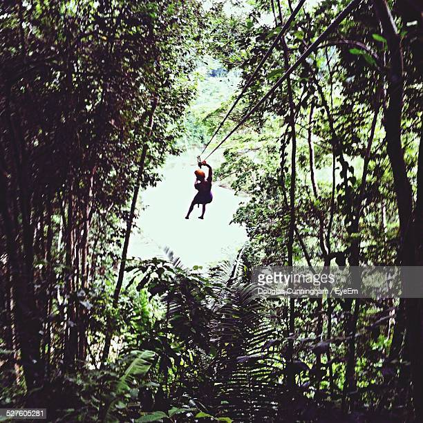Woman Zip Line In Forest