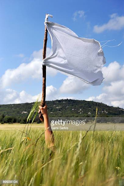 Woman's arm holding a white flag in wheat field