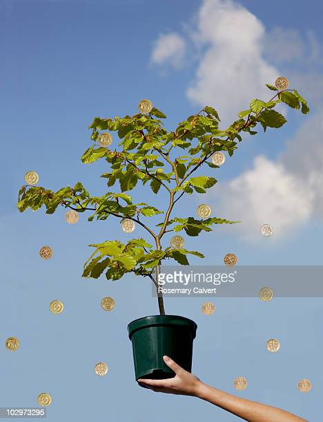Woman's arm holding tree producing one pound coins