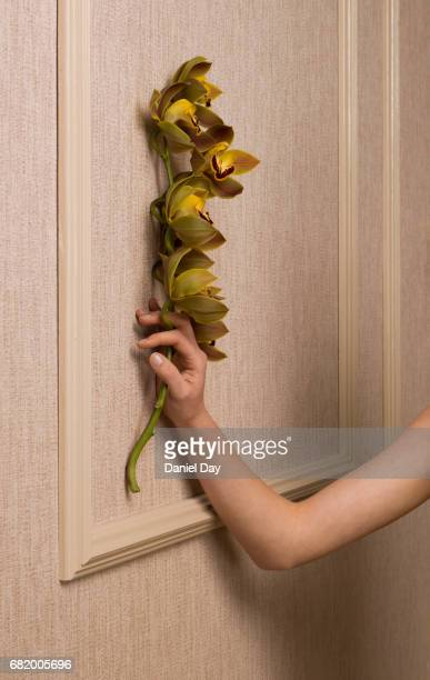 Woman's arm leaning up against a wall holding a stem of Orchard flowers