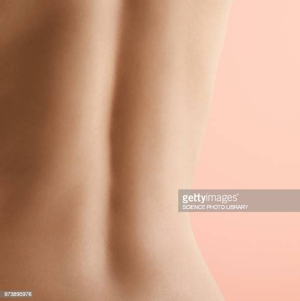 woman's back - human skin stock pictures, royalty-free photos & images