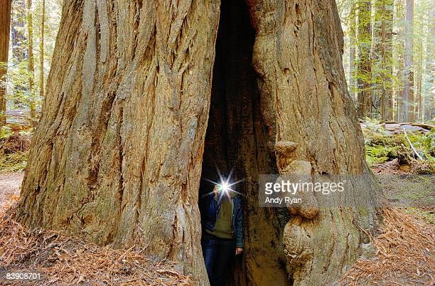 Woman's Camera Flash Inside Giant Tree