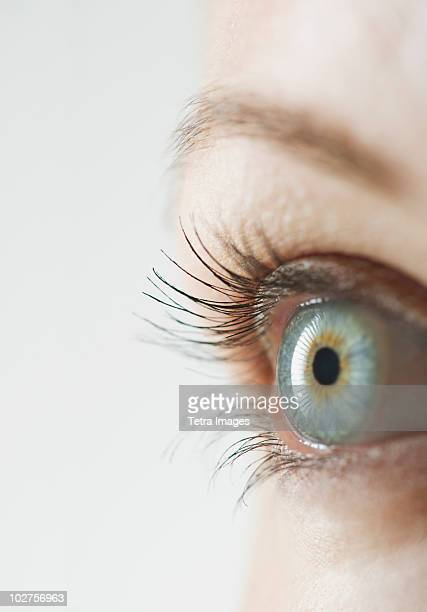 woman's eye - blue eyes stock pictures, royalty-free photos & images